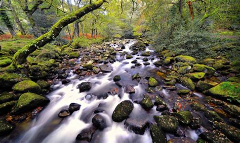 Nature, Beautiful, River Stones, Trees : Wallpapers13