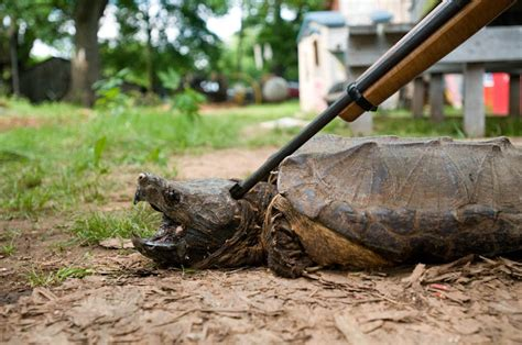 Cane River Creoles – The Turtle » Cane River Stories