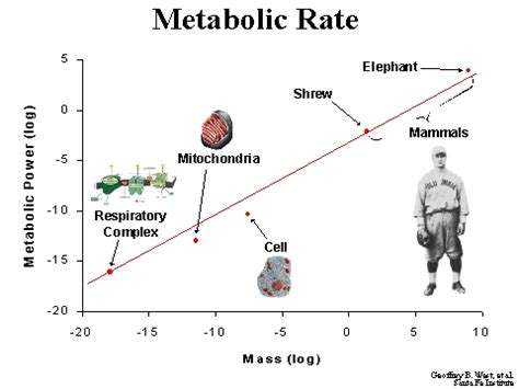 WHAT IF I HAVE A SLOW METABOLIC RATE? | WAIT LOSS!