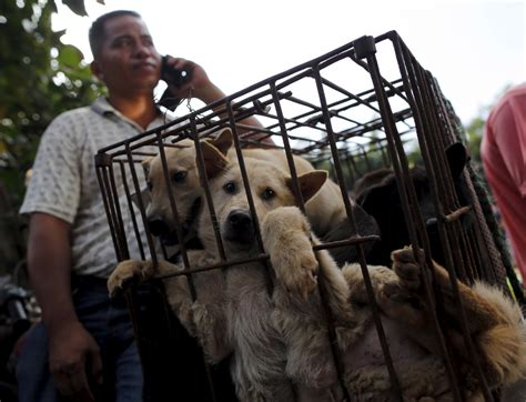 China's Dog Meat Festival: 10 things you need to know