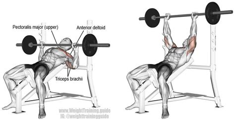 Incline barbell bench press | Best chest workout, Bench